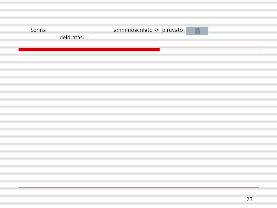 Serina ____________ amminoacrilato -> piruvato