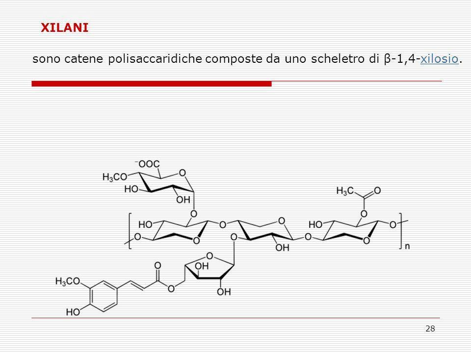 XILANI sono catene polisaccaridiche composte da uno scheletro di β-1,4-xilosio.