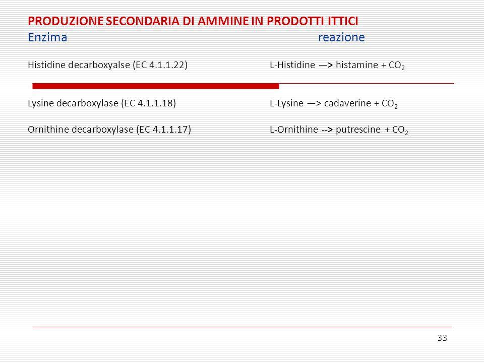 PRODUZIONE SECONDARIA DI AMMINE IN PRODOTTI ITTICI Enzima reazione