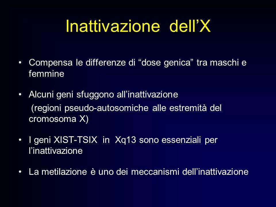 Inattivazione dell'X Compensa le differenze di dose genica tra maschi e femmine. Alcuni geni sfuggono all'inattivazione.