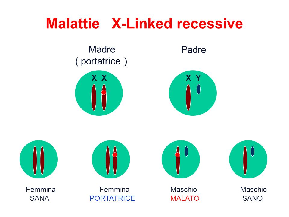 Malattie X-Linked recessive