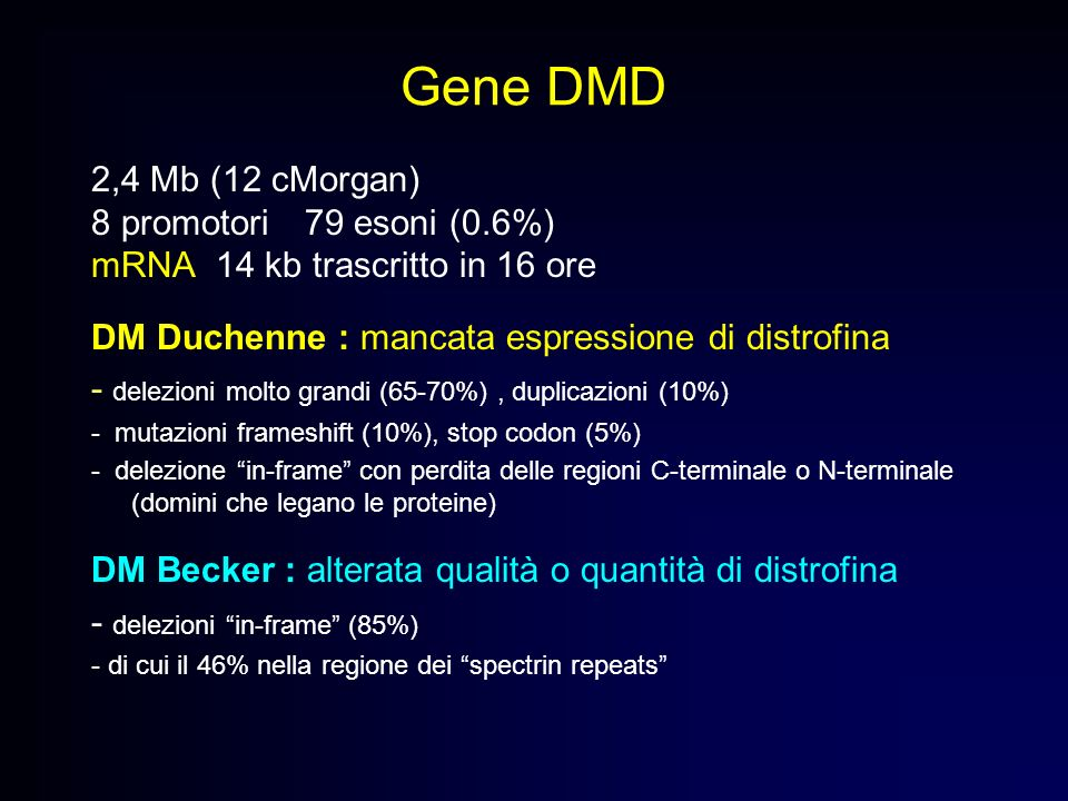 Gene DMD 2,4 Mb (12 cMorgan) 8 promotori 79 esoni (0.6%)