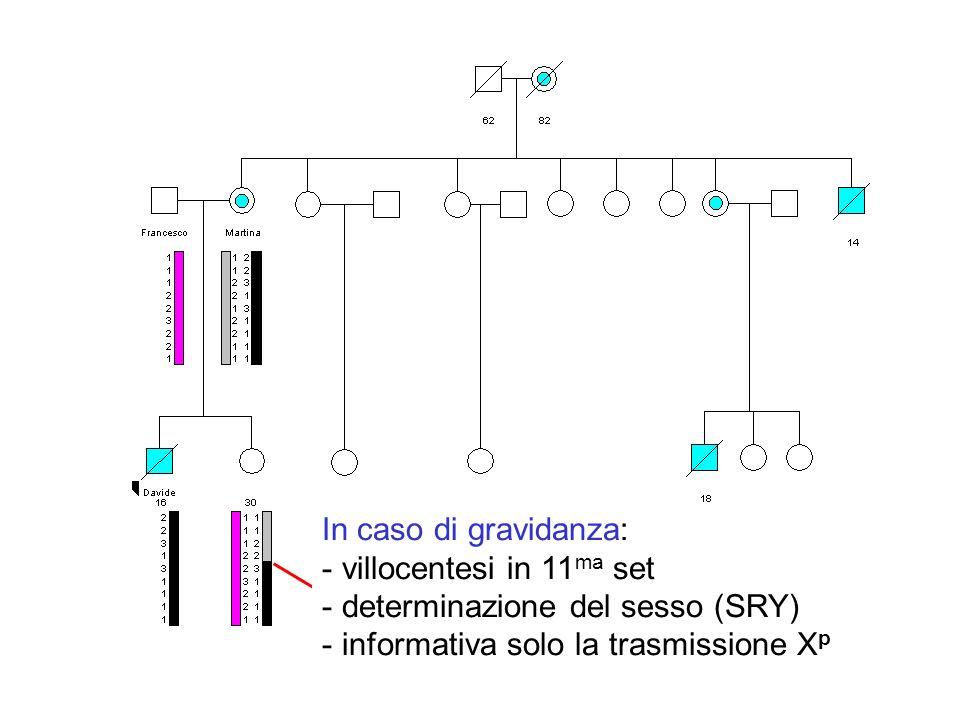 determinazione del sesso (SRY) informativa solo la trasmissione Xp