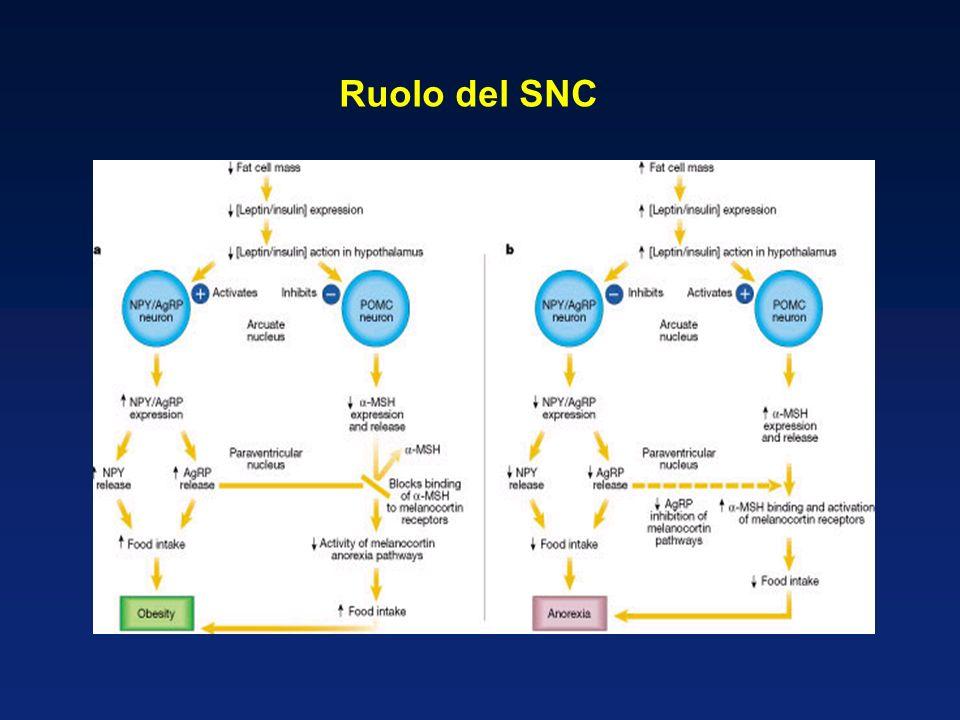 Ruolo del SNC