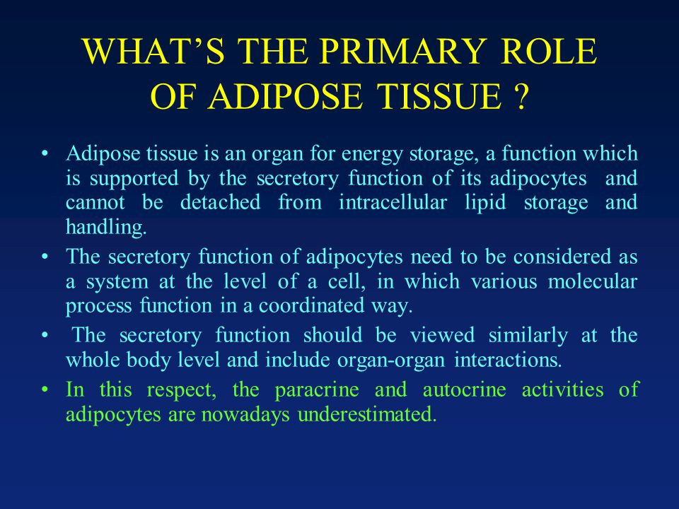 WHAT'S THE PRIMARY ROLE OF ADIPOSE TISSUE