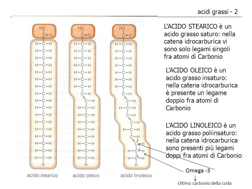 acidi grassi - 2 L'ACIDO STEARICO è un acido grasso saturo: nella catena idrocarburica vi sono solo legami singoli fra atomi di Carbonio.
