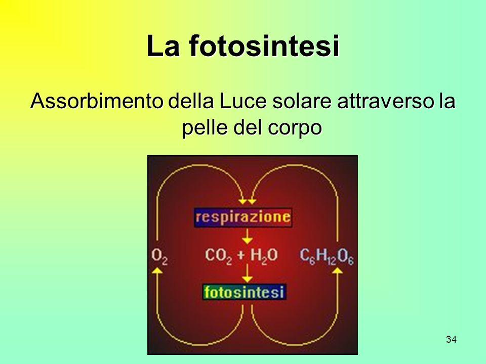 Assorbimento della Luce solare attraverso la pelle del corpo