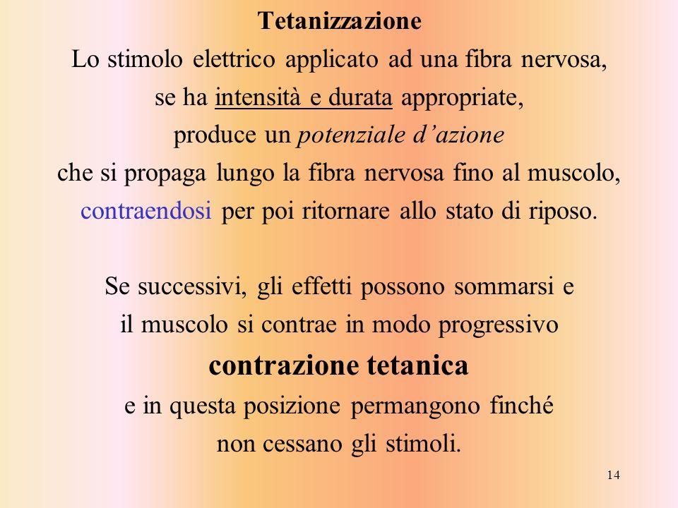 contrazione tetanica Tetanizzazione