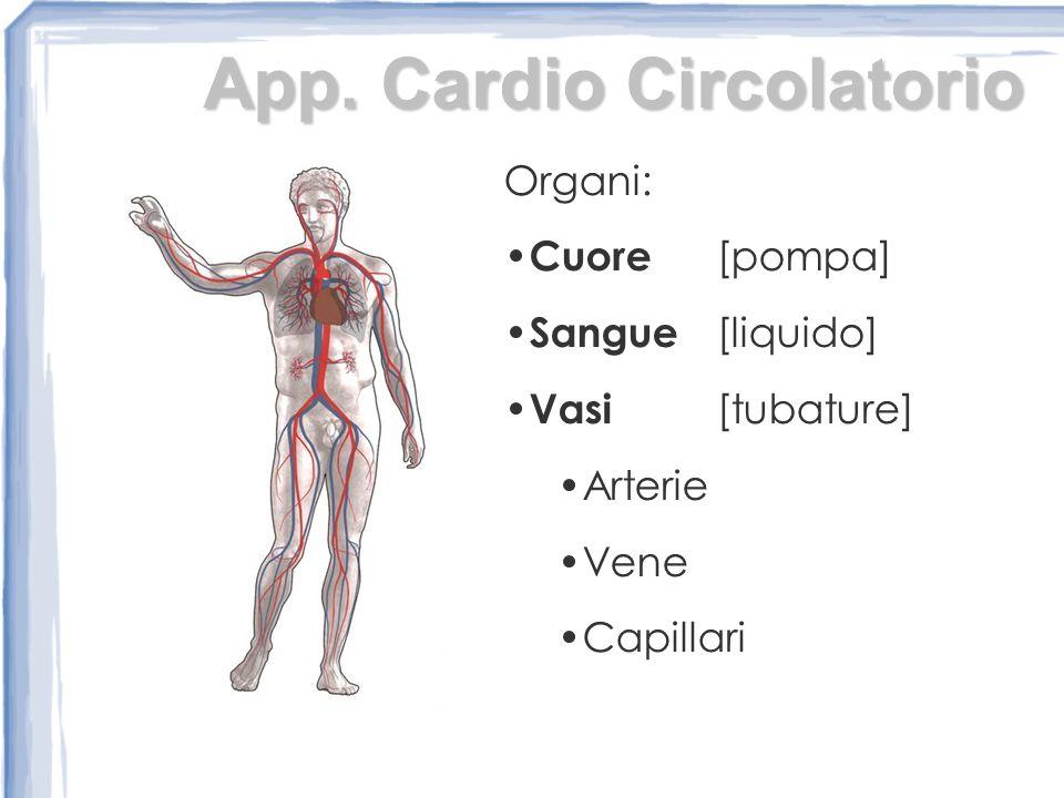 App. Cardio Circolatorio
