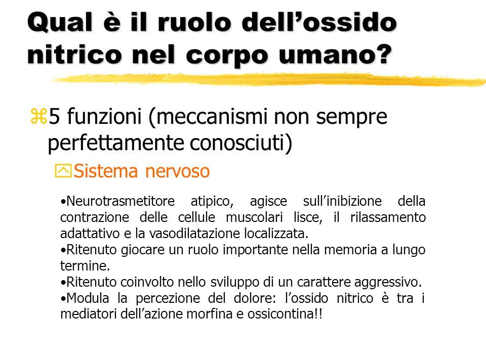 Qual è il ruolo dell'ossido nitrico nel corpo umano