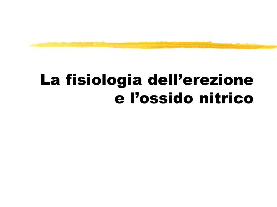 La fisiologia dell'erezione e l'ossido nitrico