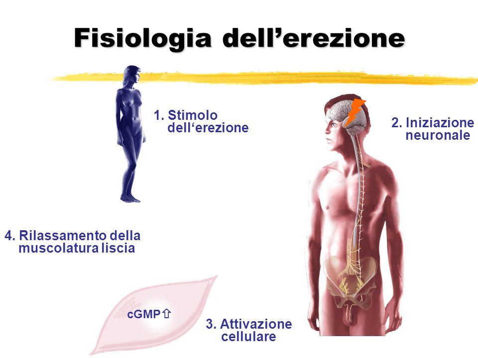 4. Rilassamento della muscolatura liscia