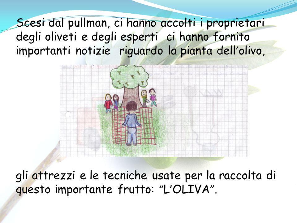 Scesi dal pullman, ci hanno accolti i proprietari degli oliveti e degli esperti ci hanno fornito importanti notizie riguardo la pianta dell'olivo,