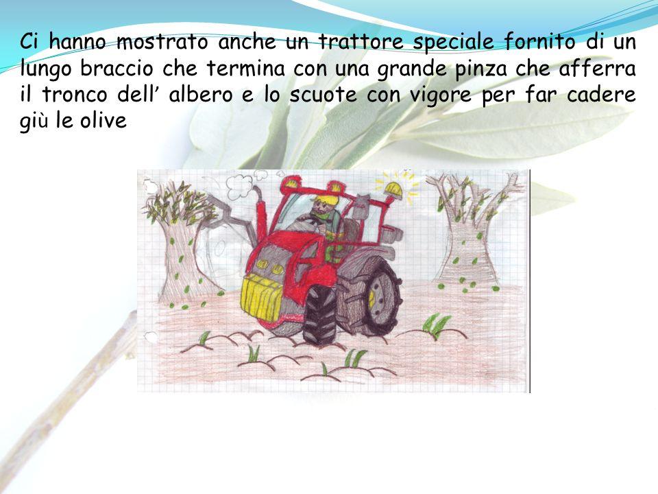Ci hanno mostrato anche un trattore speciale fornito di un lungo braccio che termina con una grande pinza che afferra il tronco dell' albero e lo scuote con vigore per far cadere giù le olive