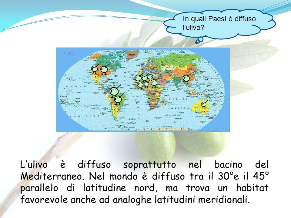 In quali Paesi è diffuso l'ulivo
