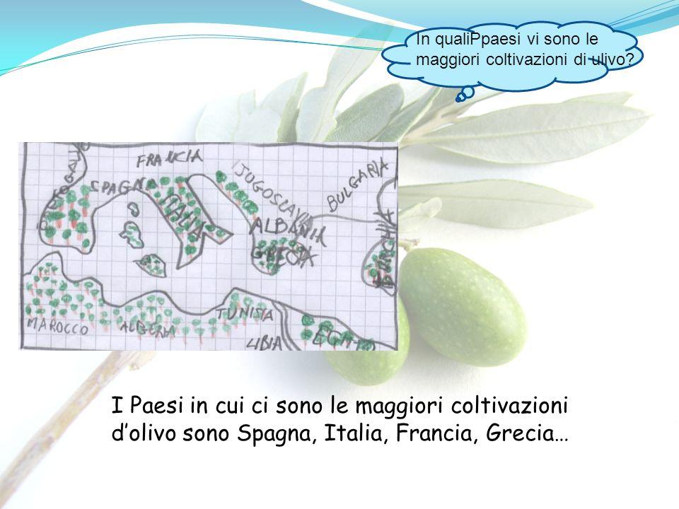 In qualiPpaesi vi sono le maggiori coltivazioni di ulivo