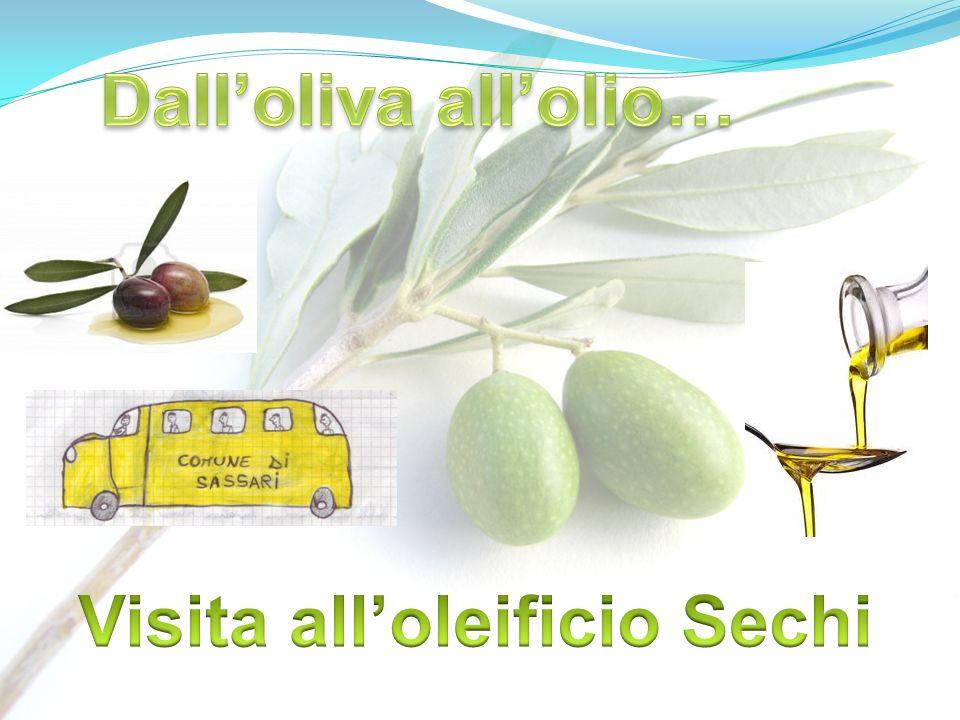 Visita all'oleificio Sechi