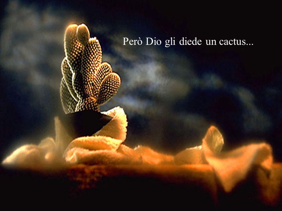 Però Dio gli diede un cactus...
