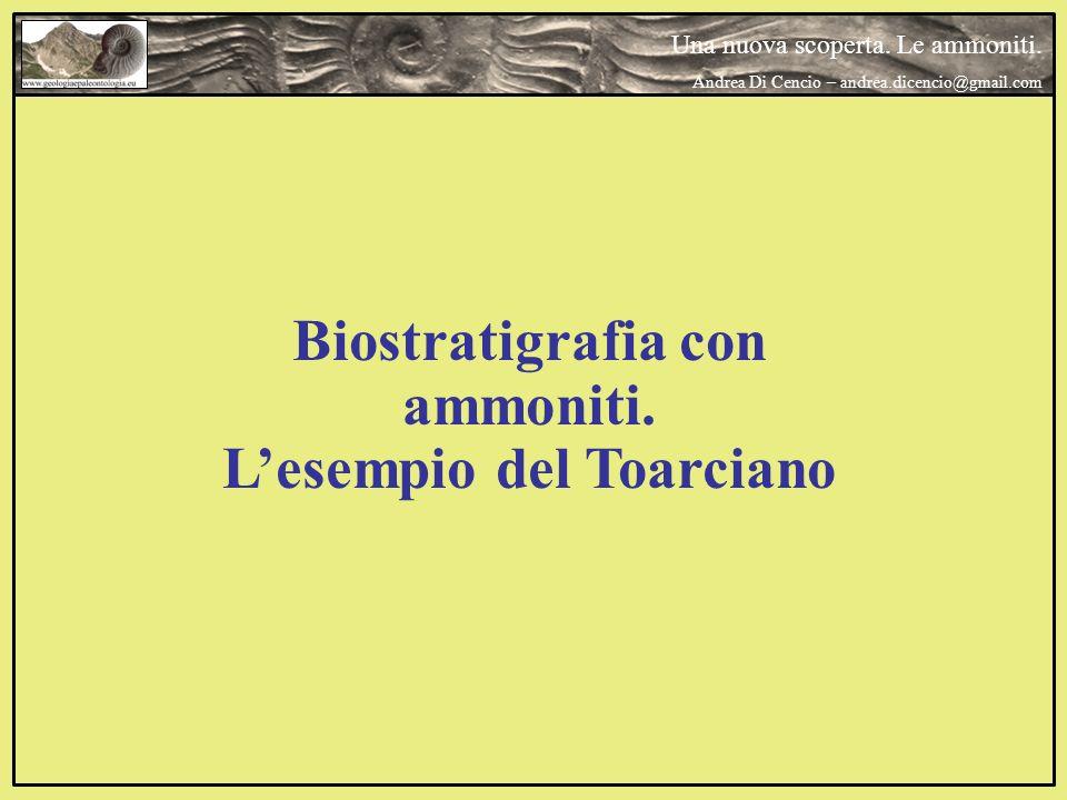 Biostratigrafia con ammoniti. L'esempio del Toarciano