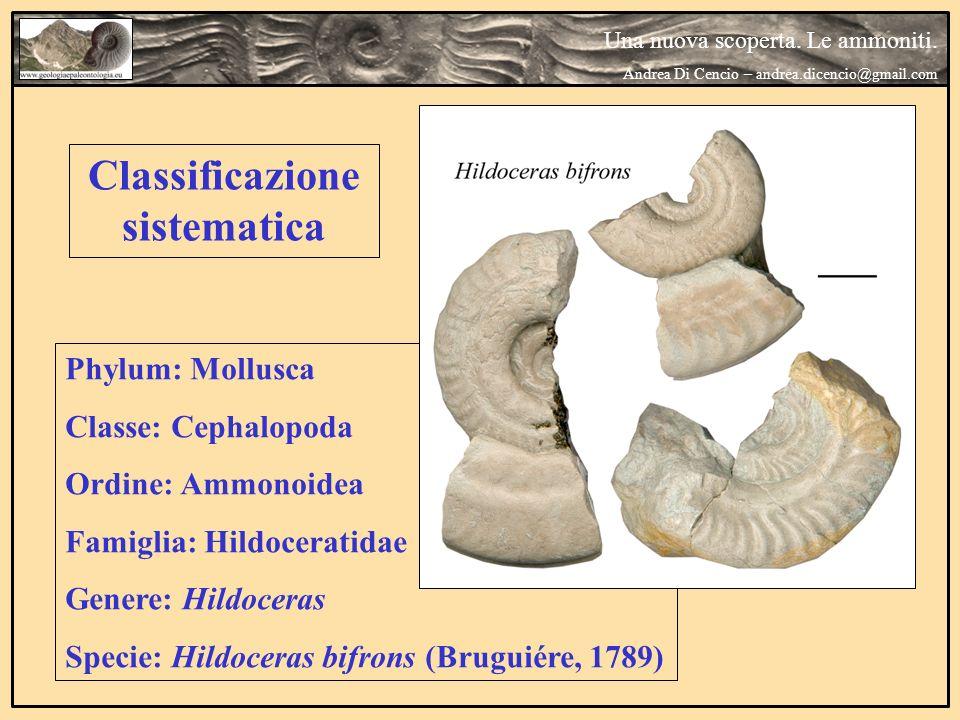 Classificazione sistematica