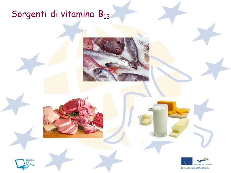 Sorgenti di vitamina B12