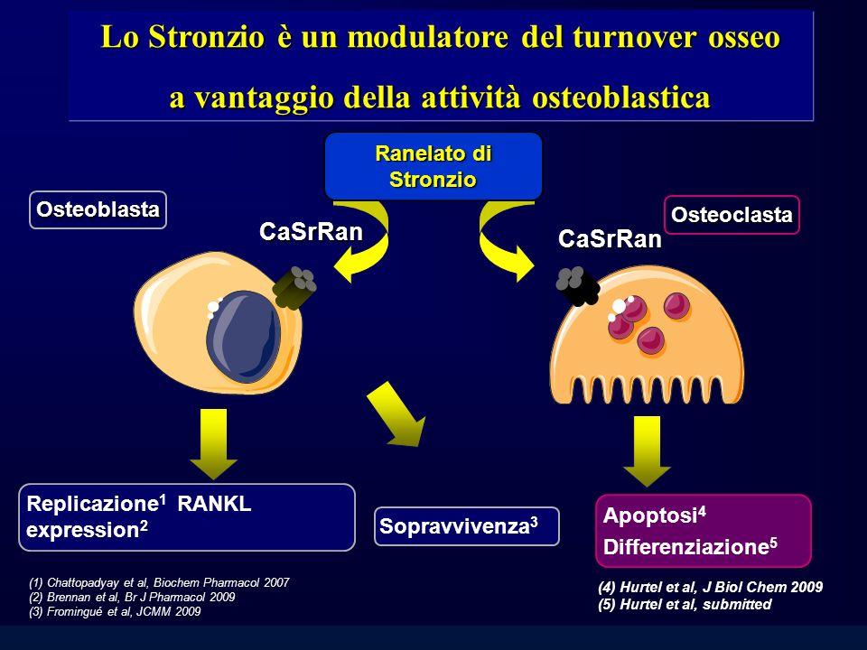 Lo Stronzio è un modulatore del turnover osseo