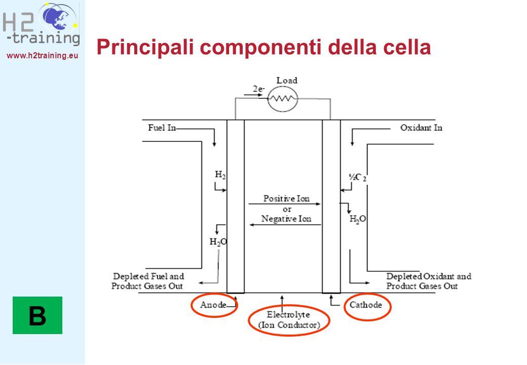 Principali componenti della cella