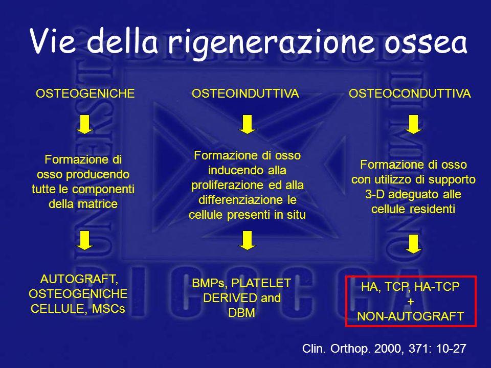 Vie della rigenerazione ossea
