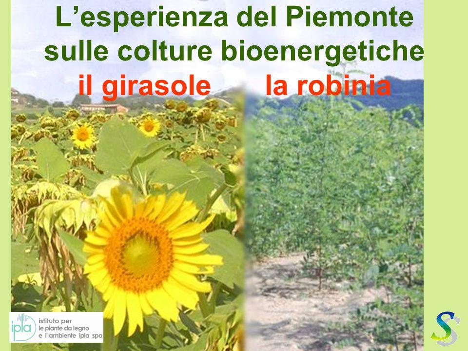 L'esperienza del Piemonte sulle colture bioenergetiche il girasole