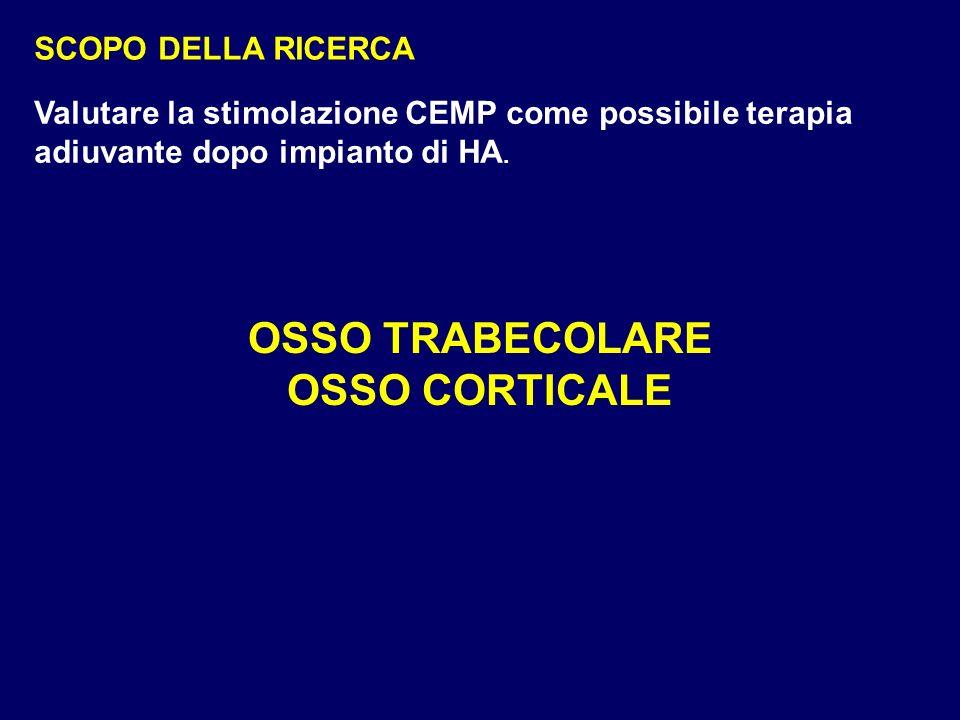 OSSO TRABECOLARE OSSO CORTICALE
