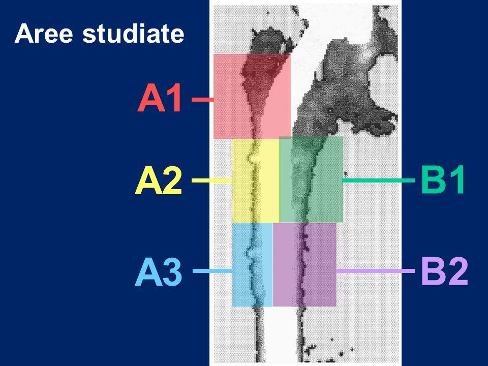 Aree studiate A1 A2 B1 A3 B2