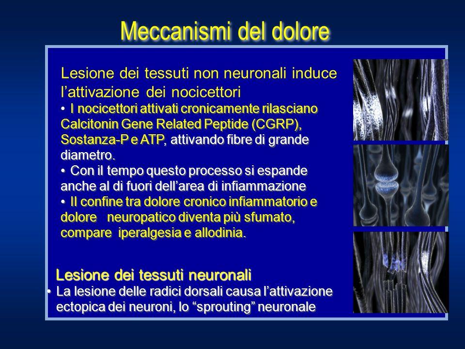 Meccanismi del doloreLesione dei tessuti non neuronali induce l'attivazione dei nocicettori.