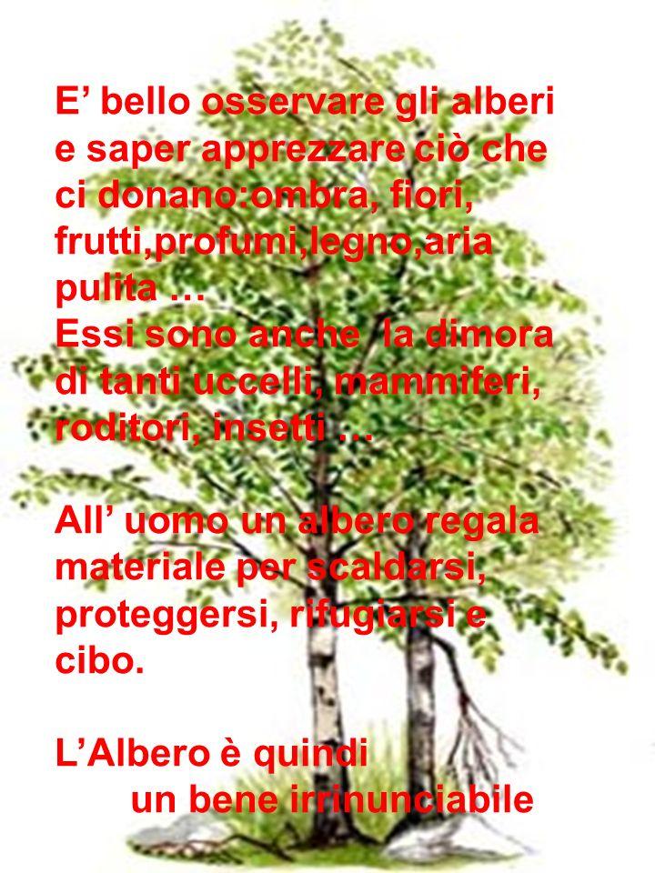 E' bello osservare gli alberi e saper apprezzare ciò che ci donano:ombra, fiori, frutti,profumi,legno,aria pulita …