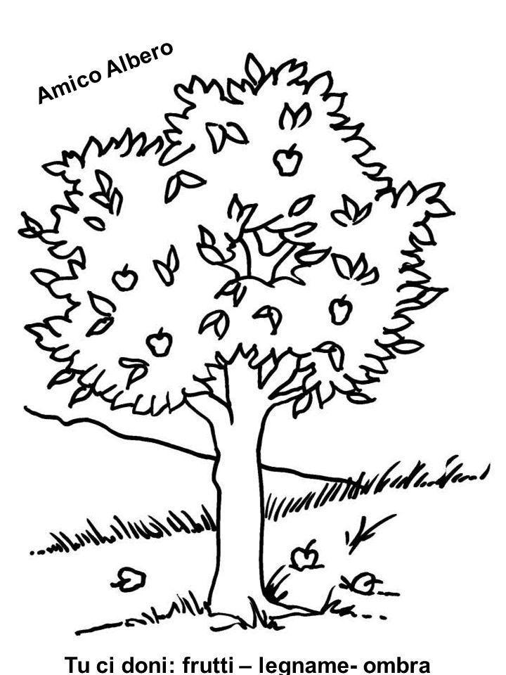 Tu ci doni: frutti – legname- ombra