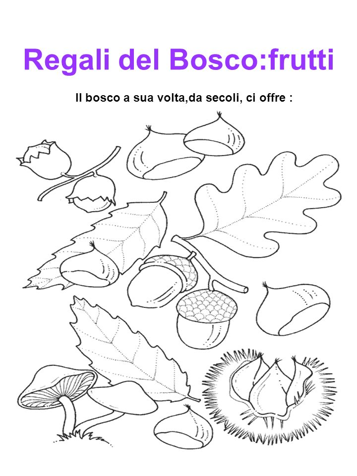 Regali del Bosco:frutti