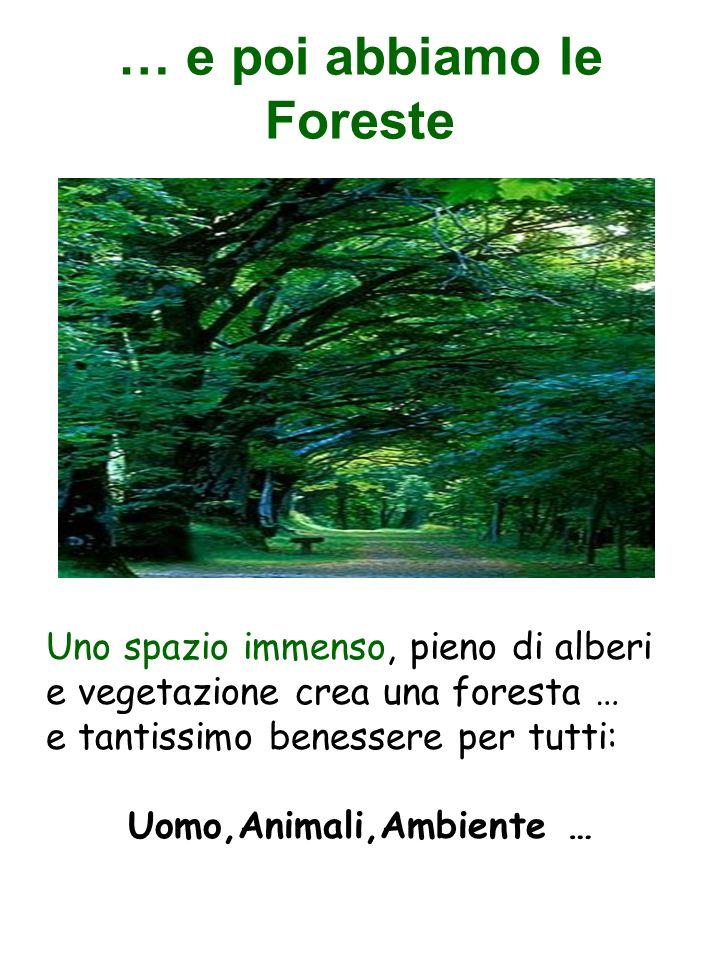 … e poi abbiamo le Foreste