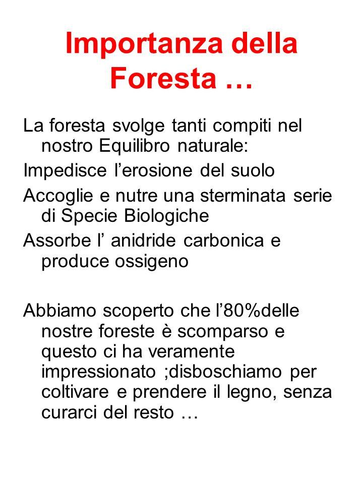 Importanza della Foresta …
