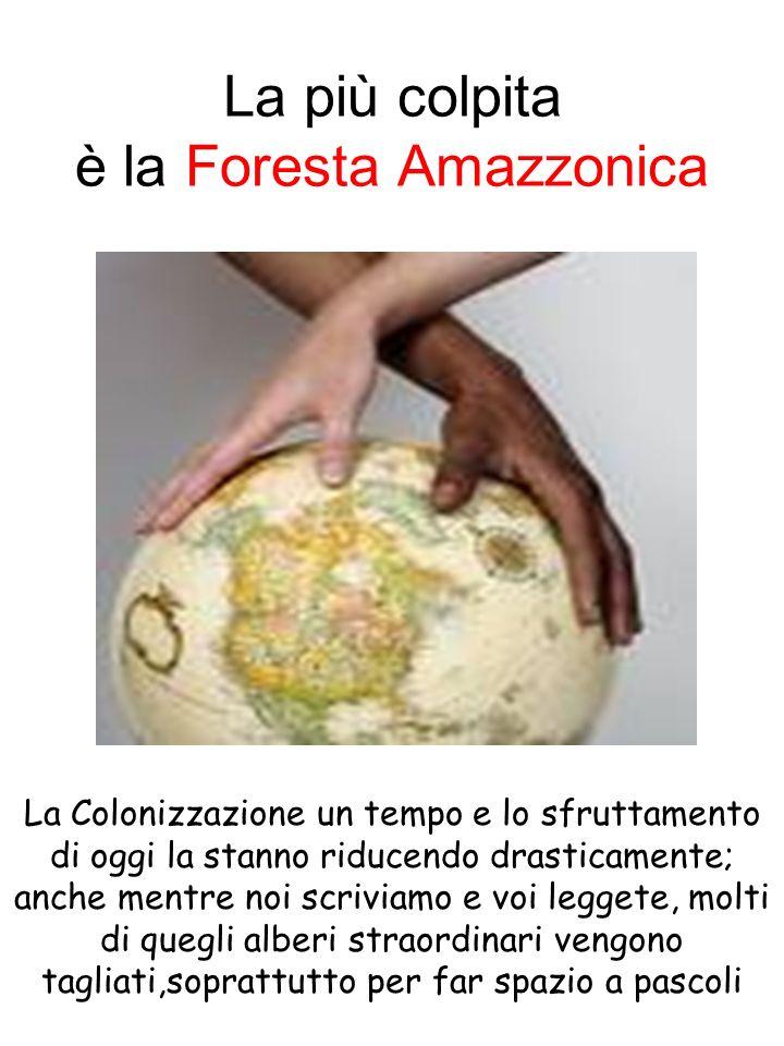 La più colpita è la Foresta Amazzonica