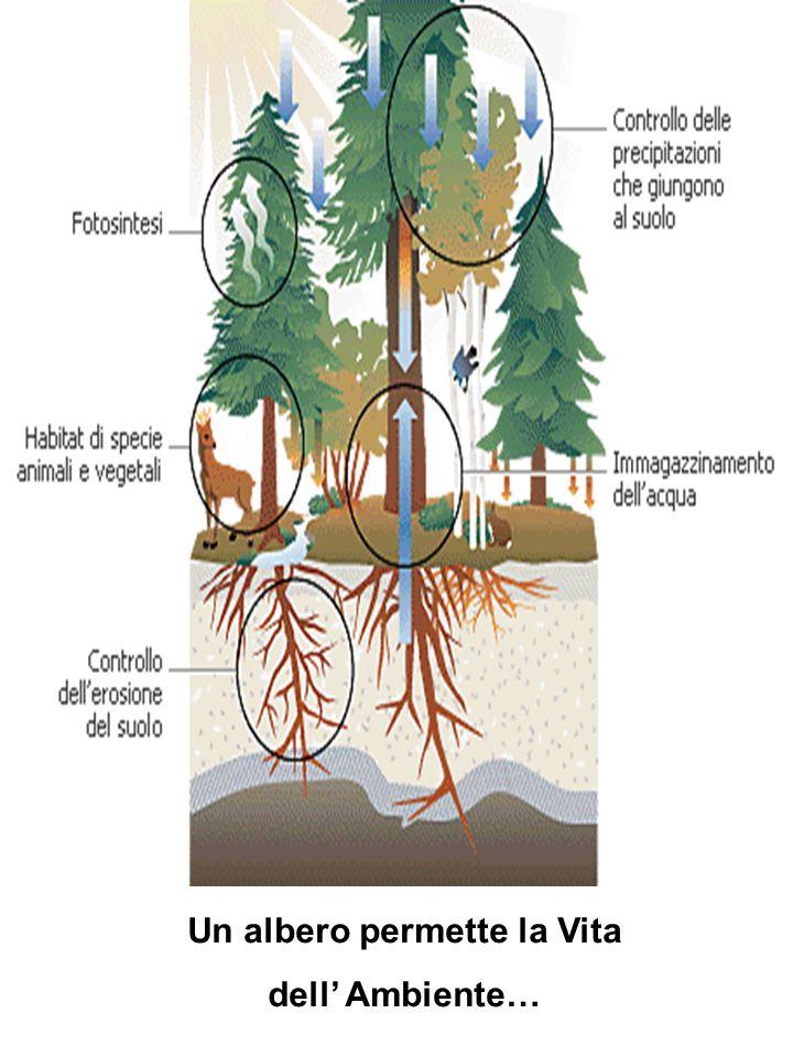 Un albero permette la Vita