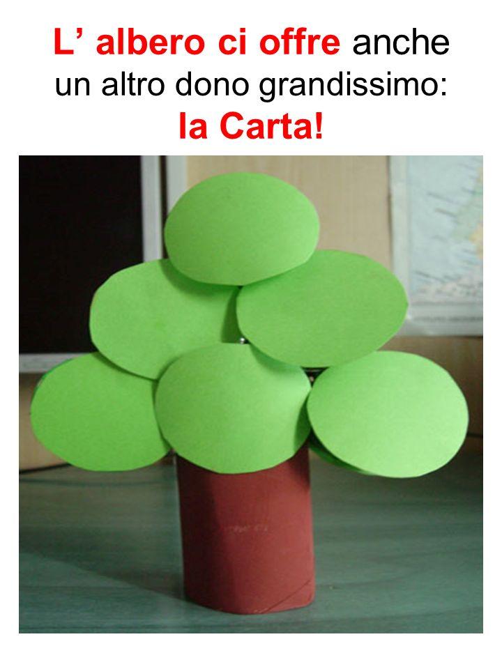 L' albero ci offre anche un altro dono grandissimo: la Carta!