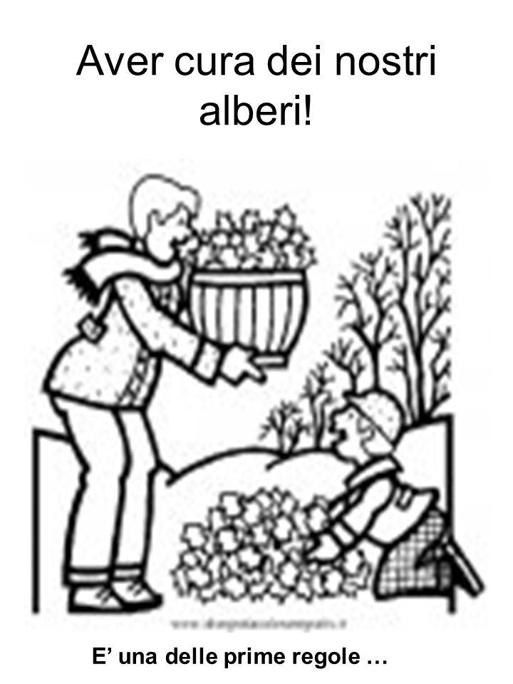 Aver cura dei nostri alberi!