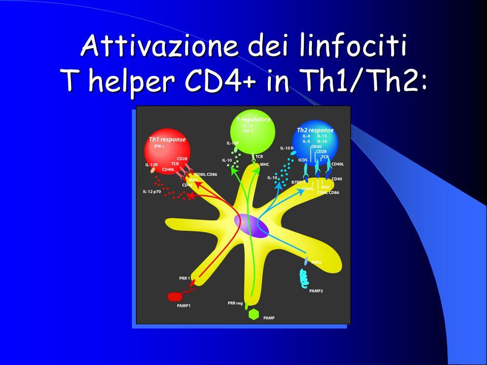 Attivazione dei linfociti T helper CD4+ in Th1/Th2: