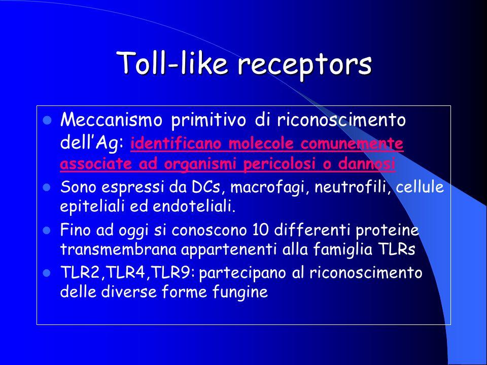 Toll-like receptors Meccanismo primitivo di riconoscimento dell'Ag: identificano molecole comunemente associate ad organismi pericolosi o dannosi.