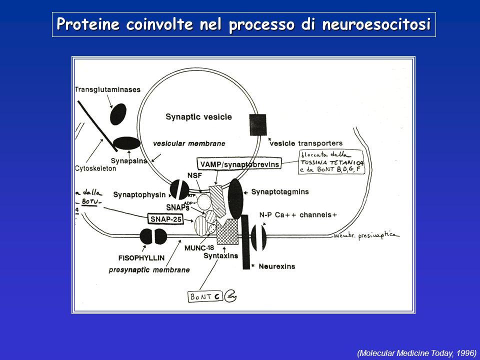 Proteine coinvolte nel processo di neuroesocitosi