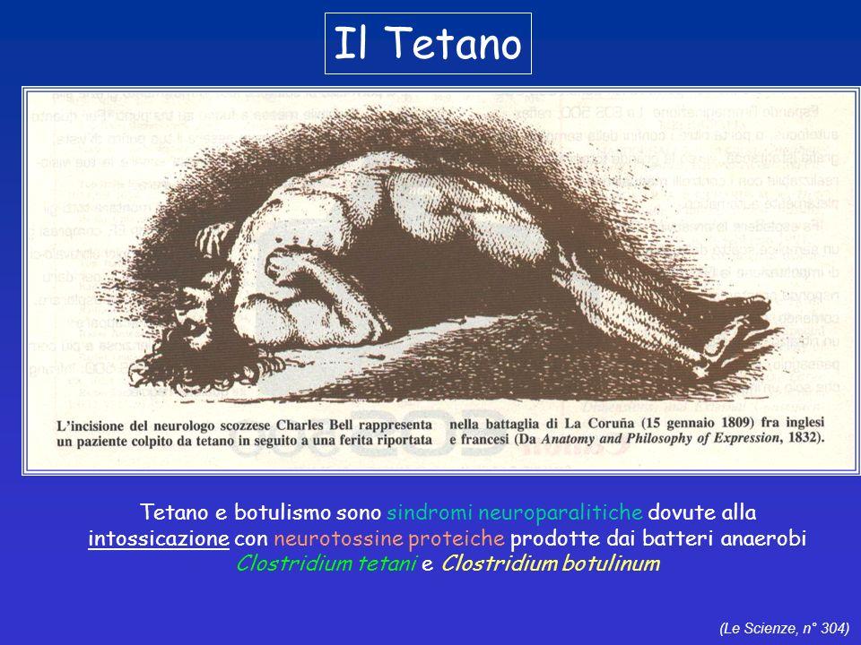 Il Tetano Tetano e botulismo sono sindromi neuroparalitiche dovute alla. intossicazione con neurotossine proteiche prodotte dai batteri anaerobi.