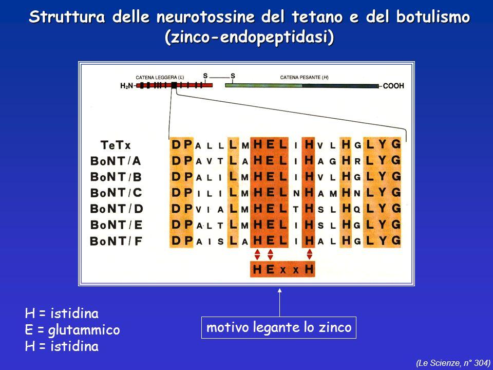 Struttura delle neurotossine del tetano e del botulismo