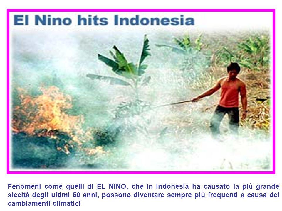 Fenomeni come quelli di EL NINO, che in Indonesia ha causato la più grande siccità degli ultimi 50 anni, possono diventare sempre più frequenti a causa dei cambiamenti climatici