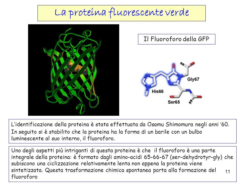 La proteina fluorescente verde