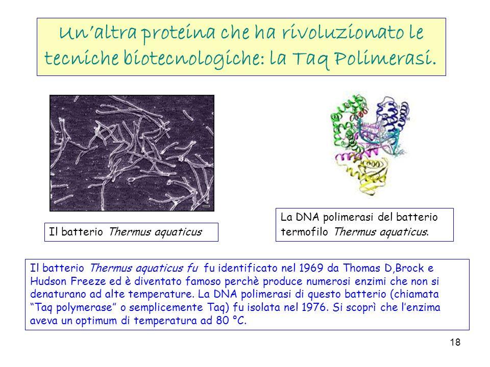 Un'altra proteina che ha rivoluzionato le tecniche biotecnologiche: la Taq Polimerasi.