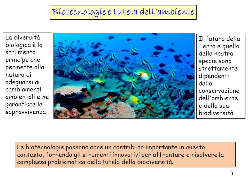 Biotecnologie e tutela dell'ambiente